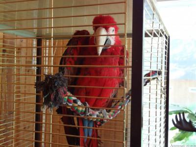 Национальный парк «Лосиный Остров». Красная сосна