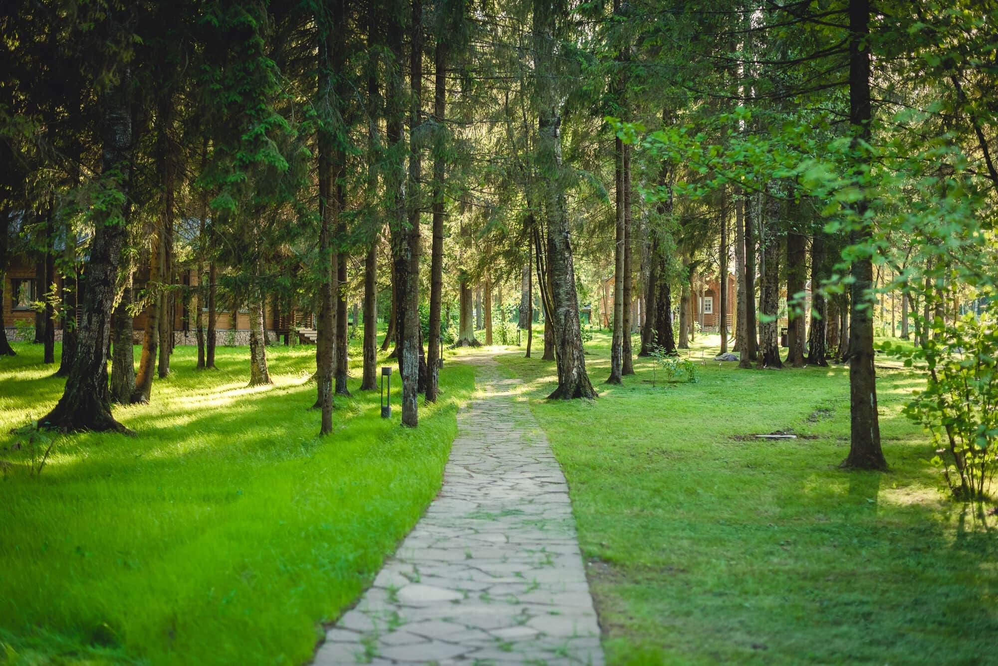 Экоотель «Изумрудный лес»