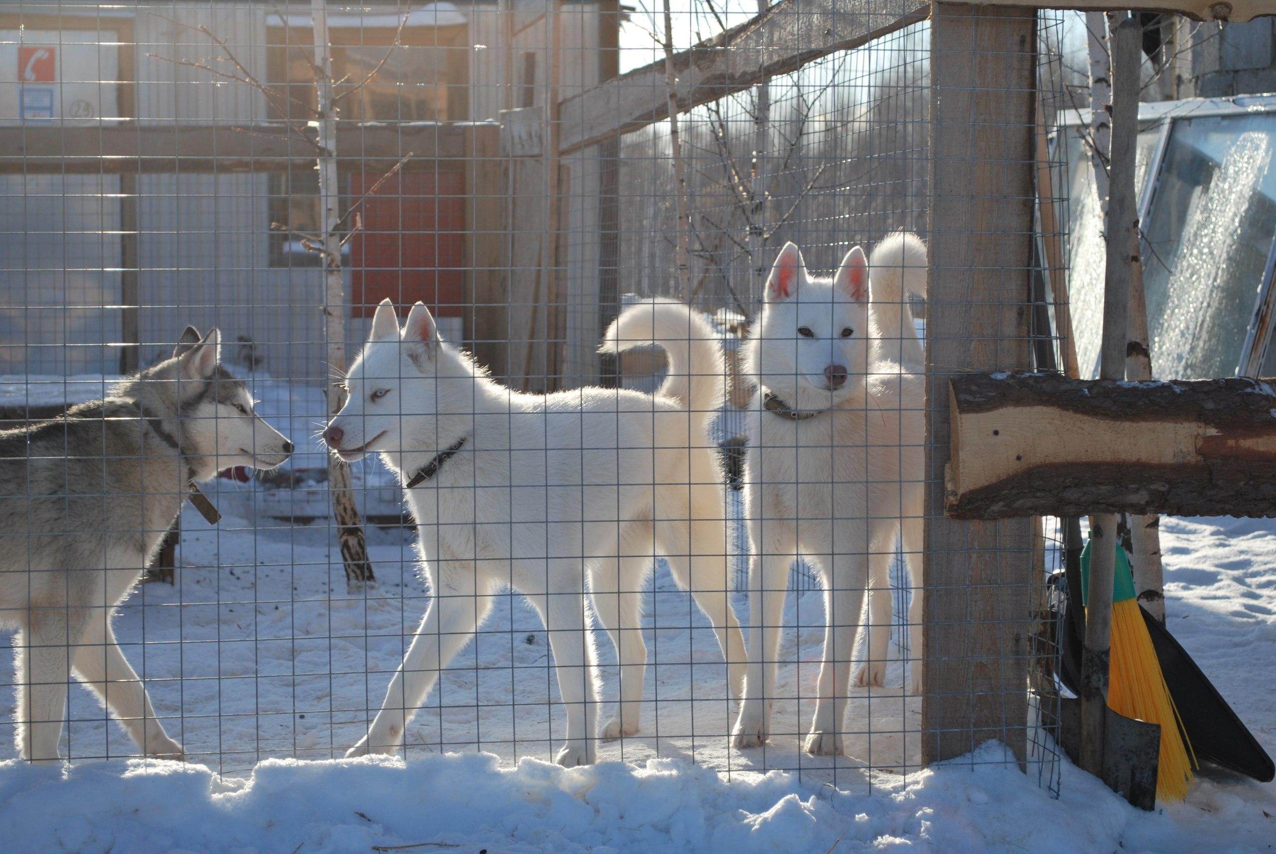 Зооцентр «Святополе»