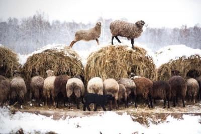 Конная база «Бородинский хутор»