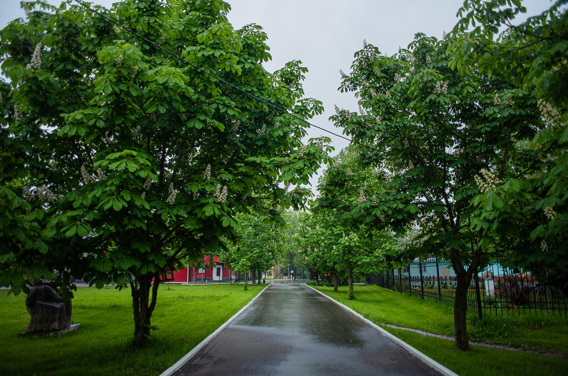 Солнечногорск, Парк Культуры и отдыха