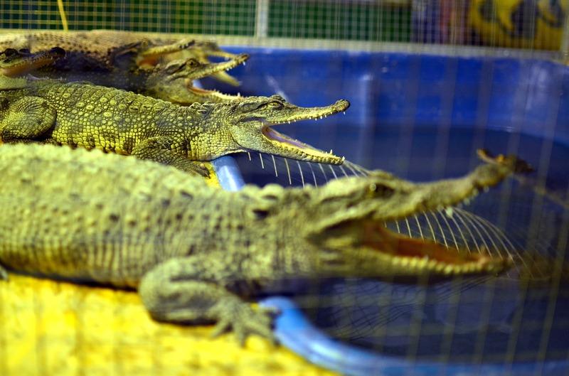 Экодеревушка и крокодиловая ферма