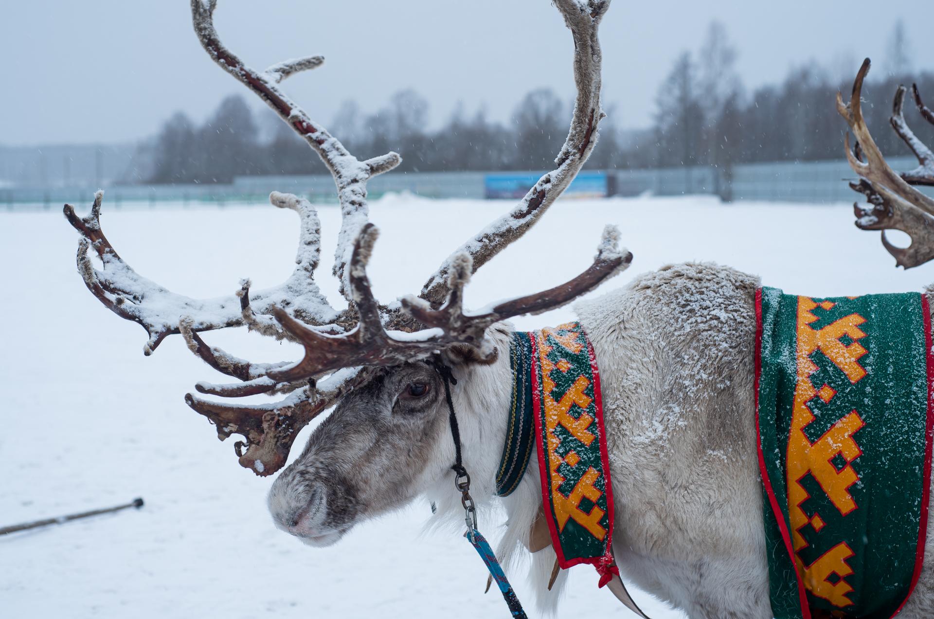 Ферма «Северный олень» в деревне Анциферово, Подкаст, Выпуск 21