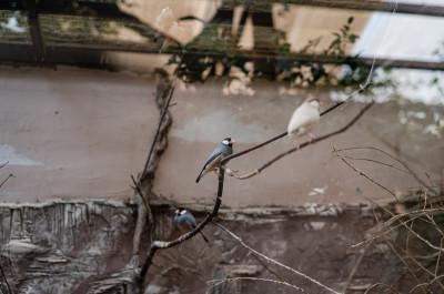 Парк птиц «Воробьи»