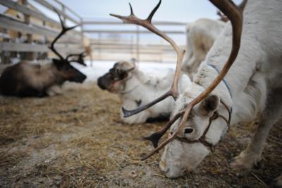 Оленья ферма в Дзержинском