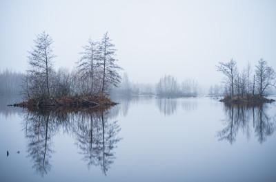 Шатурские болота