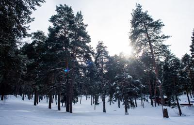 Парк в Жуковском