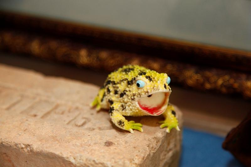 Музей лягушки в Дмитрове