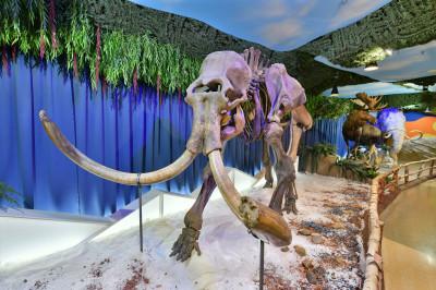 «Крокус Сити Океанариум». Экспозиция «Наш ледниковый период»