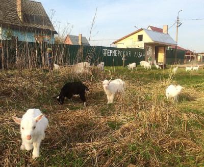 Ферма «Корнево»