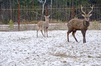 Зообаза «Мечта» в Ногинске