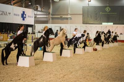 Клуб миниатюрных лошадей в КСК «Созидатель»