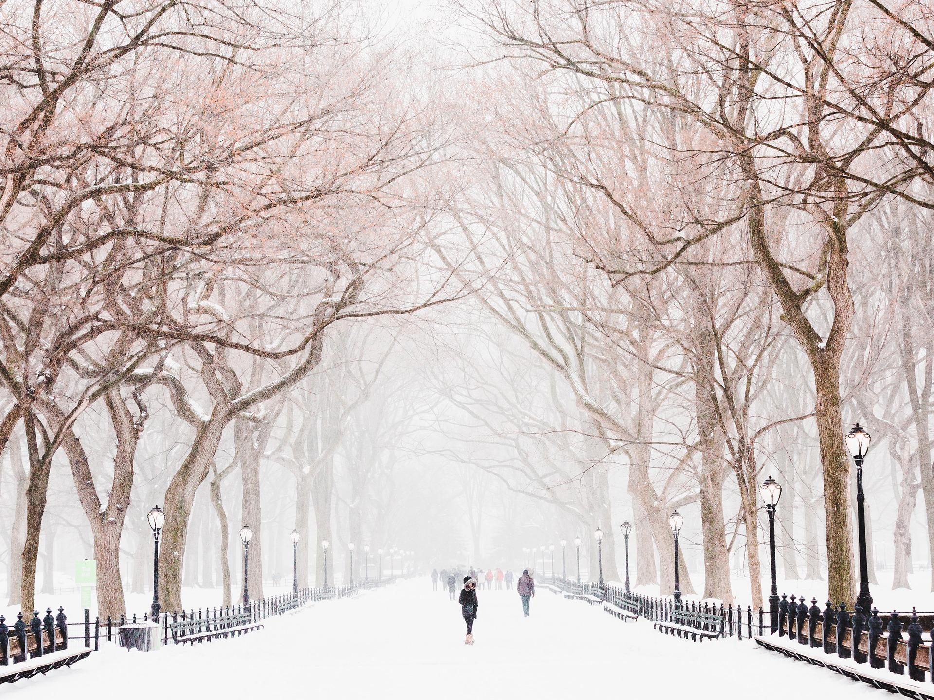 Зимний парк