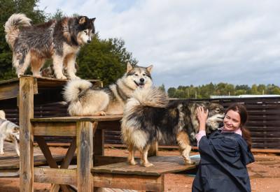 Подкаст про хаски-деревню «Рузская Аляска»