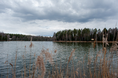 Черноголовка, озеро Северное