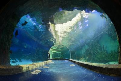 «Крокус Сити Океанариум». Экспозиция «Моря и океаны»