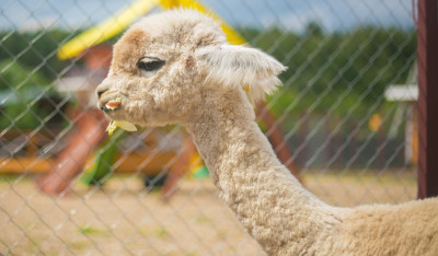 Контактный зоопарк ZOOландия